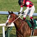 Photos: ウインフルブルーム「やっと重賞馬の仲間入りですよ~長かった~」【150104京都11R京都金杯】