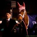 Photos: ジェンティルドンナ「厩舎の皆さんには本当にお世話になったわね…」【141228中山ジェンティルドンナ引退式】