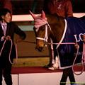 Photos: ジェンティルドンナ「っていねえよ~」【141228中山ジェンティルドンナ引退式】