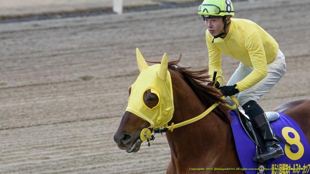 ニシノファイター(町田直)「末期色じゃないよ、まっ黄色だよ」【150103川崎11R報知オールスターC】