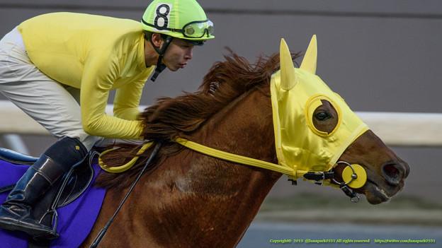 ニシノファイター「キマってるね~いい黄色だね~漲ってきたあ!」【150103川崎11R報知オールスターC】