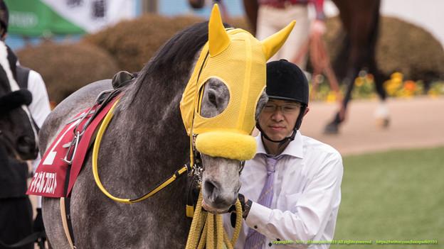 (2)マイネルフロスト「やー…また人気下げやってるわ…」曳き馬さん「いいのいいの、無事に走ってね」【150125中山11RAJCC】