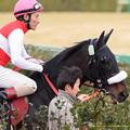 Photos: ショウナンラグーン(吉田豊)「そこそこ人気してるからしっかり稼いできますよ、ええ」【150125中山11RAJCC】