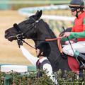 Photos: マイネルディーン「中山牝馬あたり走らせてくれねえかなぁ~」【150125中山11RAJCC】