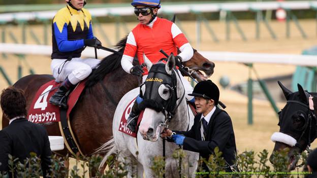 Photos: ゴールドシップ「出も白いお馬さんはがんばったのでみなさん許してね~」【150125中山11RAJCC】
