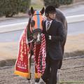 Photos: ホッコータルマエ「もう表彰式早く終わらせようよ~」【150128川崎11R川崎記念】