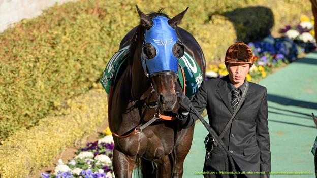 グレープブランデー「やばい、GI馬のくせしてペロペロしてるのみられちゃった」【150201東京11R根岸S】