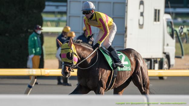 キクノストーム「番手で競馬したの久々でよくわからないまま終わってました」【150201東京11R根岸S】