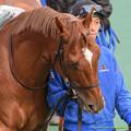 Photos: (3)リルダヴァル「2年越しで東京新聞杯に出ることができました」【150208東京11R東京新聞杯】