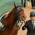 Photos: マイネルホウオウ「こら!『誰?』とか言わないで、寂しいから!」【150208東京11R東京新聞杯】 #ジロリ馬