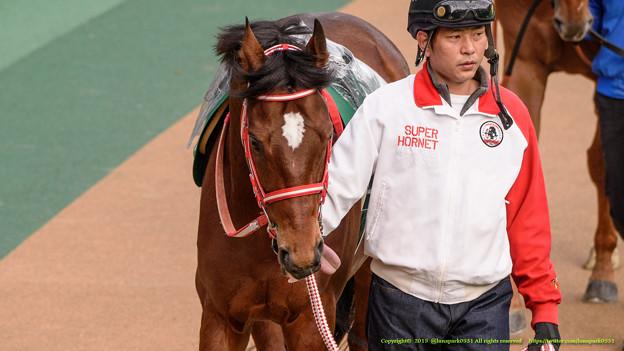 アンコイルド「距離短いからちゃんと集中できるように今のうちにペロペロしておこう」【150208東京11R東京新聞杯】 #ペロリ馬