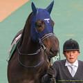 Photos: アルフレード「まあでもいつでも希望を持ってるですよ、G1馬ですからね」【150208東京11R東京新聞杯】