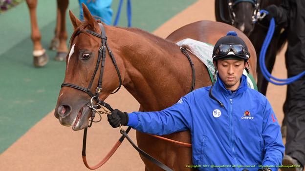 リルダヴァル「でも今年はちゃんと予定通りやってくれてよかったよ(ヒャッハー」【150208東京11R東京新聞杯】 #ジロリ馬