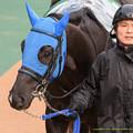 Photos: シャイニープリンス「リルさん表情が怖い(パチクリ」【150208東京11R東京新聞杯】