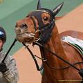 マイネルホウオウ「G1馬なんですよ、それっぽい顔してるでしょ?」【150208東京11R東京新聞杯】 #ジロリ馬