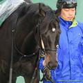 フルーキー「でっへっへ~(ペロペロ」【150208東京11R東京新聞杯】 #ペロリ馬