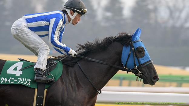 シャイニープリンス「もう馬場のことなんかいってられませんよ、ここまできたら」後藤「いけるとこまでいったろうぜえ!」【150208東京11R東京新聞杯】