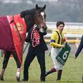 ヴァンセンヌ「でも勝っちゃいましたヘッヘッヘ」【150208東京11R東京新聞杯】 #ジロリ馬
