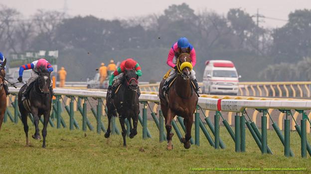 メイショウカドマツ、2着に4馬身差をつけて圧勝。追ってるカムフィーとマイネルアイザックはヴォルシェーブとモビールに差され4、5着【150208東京10R早春S】