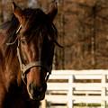 Photos: エーシンフォワード「おやおや、あんたら競馬やりにいかないのか?」【141123レックススタッド】 #見つめうま