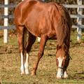 Photos: エイシンアポロン「ああいう牝馬ちゃんの子供作ってみたいね~」【141123レックススタッド】
