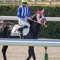 Photos: スヴァラッシー(丸山)「私も馬名でクスクスされるのよね~」【150214小倉5R4上500万下】