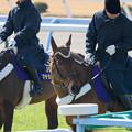 Photos: メイショウカイドウ「ってか走りたいな~」【150214小倉5R4上500万下】