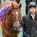 Photos: ?コパノリッキー「フォーチュンさん知らなかったんだ…」【150222東京11RフェブラリーS】