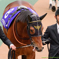 Photos: (8)レッドアルヴィス「ここでリッキーさん負かして勝っちゃったらアリュール父ちゃんうっはうはだね~(ペロンペロ-ン」【150222東京11RフェブラリーS】 #ペロリ馬