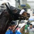 Photos: ?ヒラボクディープ「雨だよ!すげえ降ってるよ!ディセンバーのときみたいだよ!」【150301中山11R中山記念】 #ジロリ馬