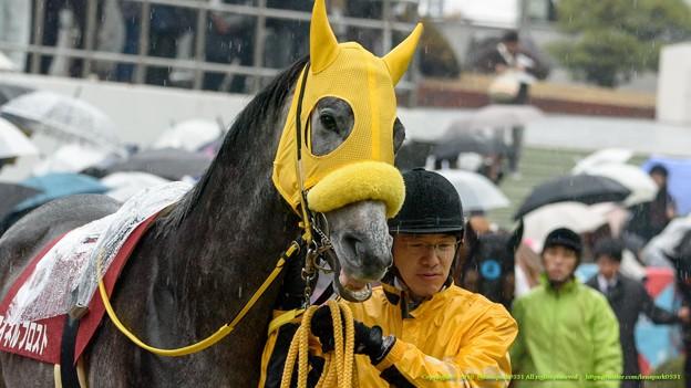 マイネルフロスト「ぁ・・あれホントに牝馬なのか…?」【150301中山11R中山記念】