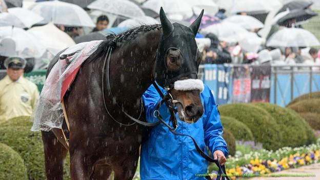 ヒラボクディープ「雨が嫌いなお馬さんもいるんだね~」【150301中山11R中山記念】