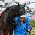 Photos: ヒラボクディープ「雨が嫌いなお馬さんもいるんだね~」【150301中山11R中山記念】