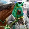 Photos: ヌーヴォレコルト「へえ~お父さんて良馬場以外走ったことないんですか~じゃあ私の重適性わからないじゃない!」【150301中山11R中山記念】 #ジロリ馬