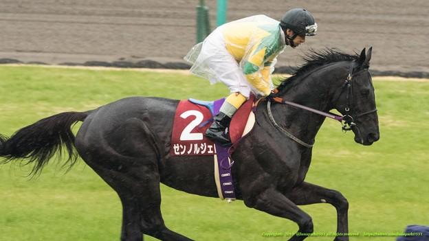 ゼンノルジェロ(熊沢)「年長牡馬としてカッコイイところみせてやらないとな」【150301中山11R中山記念】