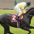 Photos: ゼンノルジェロ(熊沢)「年長牡馬としてカッコイイところみせてやらないとな」【150301中山11R中山記念】