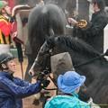 Photos: イスラボニータ「なんでこんな馬場で走らなきゃいけないの?」「よくがんばりましたよ」【150301中山11R中山記念】