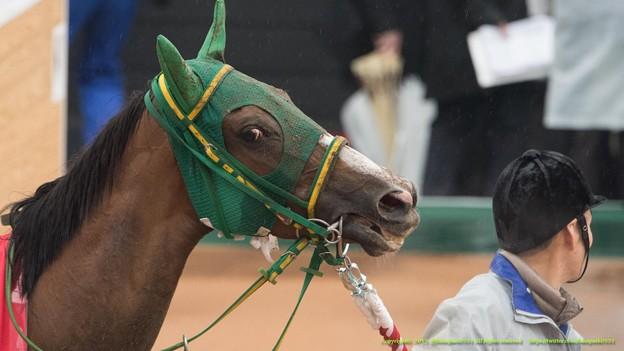 ヌーヴォレコルト「やだ、全部聞いてたのかさ!」【150301中山11R中山記念】 #ジロリ馬
