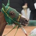 Photos: ヌーヴォレコルト「やだ、全部聞いてたのかさ!」【150301中山11R中山記念】 #ジロリ馬