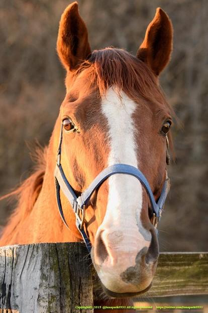 シルクジャスティス「こんなつぶらな瞳のお馬さんが苦労させるわけないじゃない、ねえ?」←は、はい【141123畠山牧場】