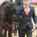 トーセンバジル「こんなに重賞馬ばかりいるけど…G1じゃないんだよね…?」【150308中山11R弥生賞】