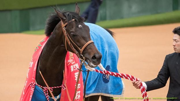 Photos: サトノクラウン「これも勝ち馬の宿命なのかぁ、耐えねば~」【150308中山11R弥生賞】