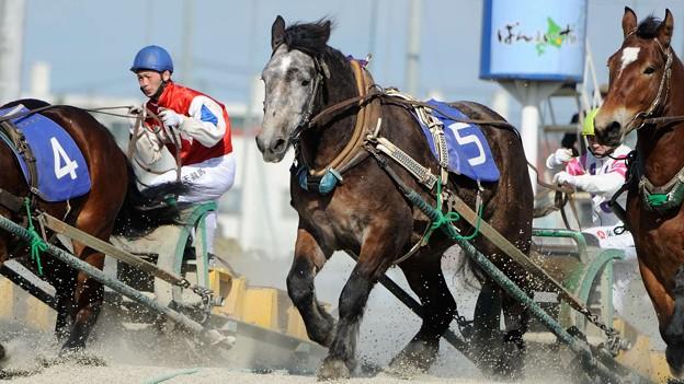 [140323帯広7R福寿草特別OP]圧倒的一番人気の黒ユリ賞馬キサラキクも並んで登坂