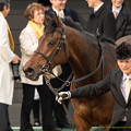 Photos: バウンスシャッセ「アイスさん人気だなぁー」【150315中山11R中山牝馬S】 #keiba