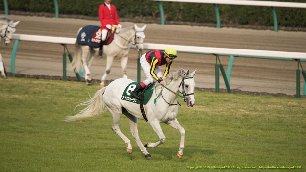 アイスフォーリス(三浦)「いつも誘導馬さんと間違われたわね~誘導馬さんたちともお別れだわ~」【150315中山11R中山牝馬S】