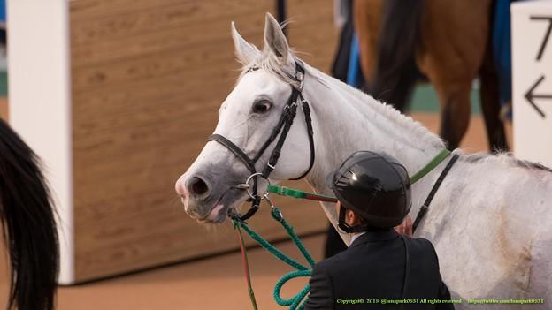 アイスフォーリス「そっちのみなさんちゃんとみてくれてますか~」【150315中山11R中山牝馬S】 #ジロリ馬