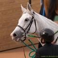 Photos: アイスフォーリス「そっちのみなさんちゃんとみてくれてますか~」【150315中山11R中山牝馬S】 #ジロリ馬