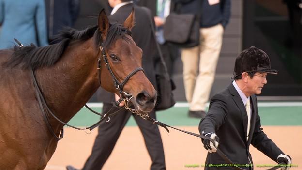 バウンスシャッセ「アイスさん目立ってるわね~」【150315中山11R中山牝馬S】 #ジロリ馬