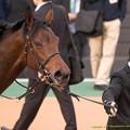 Photos: バウンスシャッセ「アイスさん目立ってるわね~」【150315中山11R中山牝馬S】 #ジロリ馬