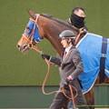Photos: エバーブロッサム「みんなに愛されるお馬さんになりたいな~」【150315中山11R中山牝馬S】